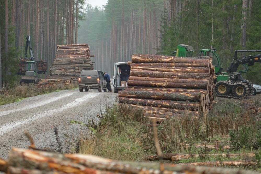 """По вашим письмам: """"Уничтожение леса в Усть-Нарве!"""""""