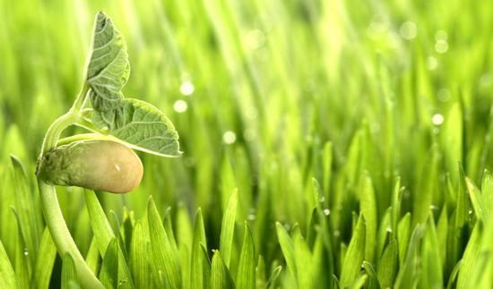 Растительная революция: как работает сознание растений