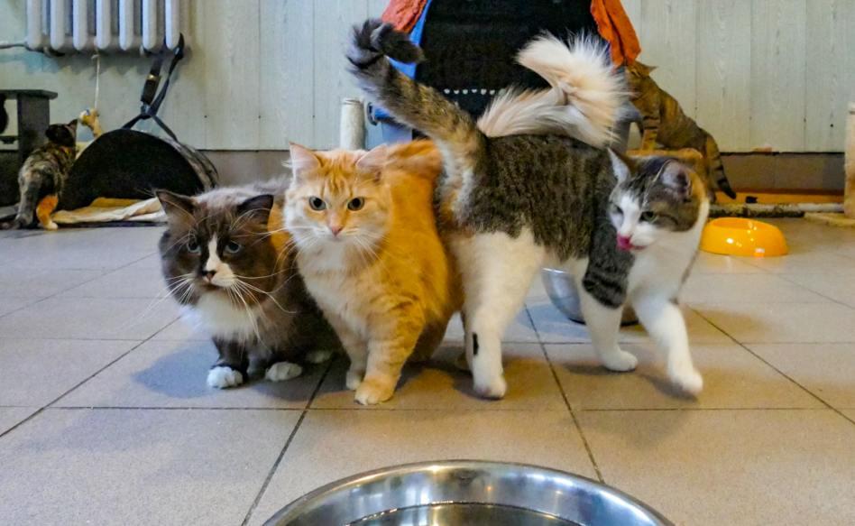 В Нарве новогодняя бесплатная раздача котов на любой вкус и цвет!