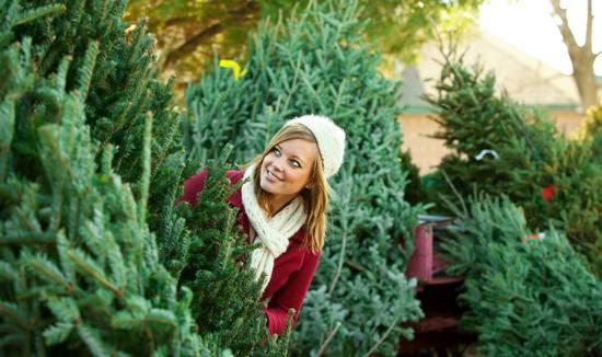 Что нужно знать, чтобы купить идеальную новогоднюю ёлку