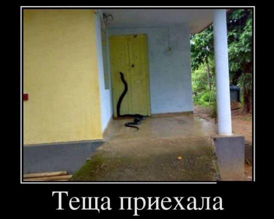 krohu-izmenil-zhene-s-teshey-porno-russkoe